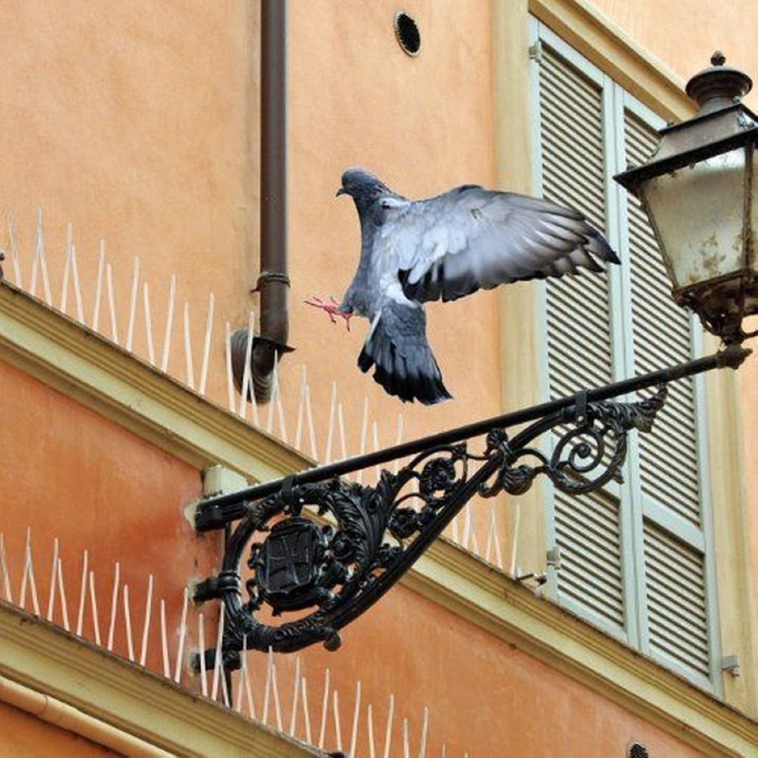 Ochrana proti ptactvu