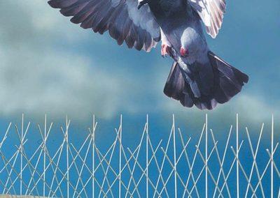 Ochranné systémy fasád proti ptactvu 03
